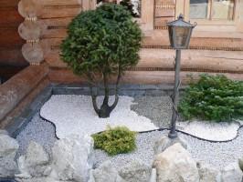 galeria holisz krzewy2