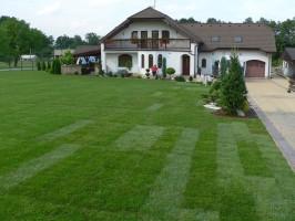 trawniki z rolki holisz